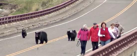 Bears on Bridge
