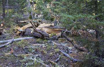 Treetop broken off by lightning.