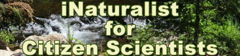 iNaturalist for Citizen Scientists