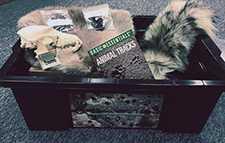 Skull and Fur Kit