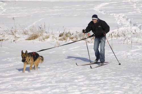 Skijoring with UltraPaw