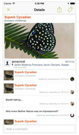 iNaturalist observation detail page.
