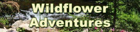 Wildflower Adventures