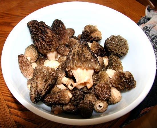 Morels on a Plate