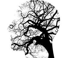 Brain on Trees