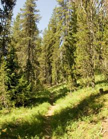 Pumice Flat Trail