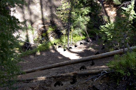 Down to Whitehorse Creek.