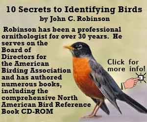 Secrets to Identifying Birds