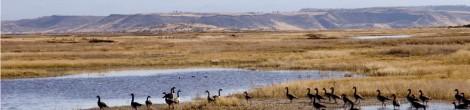 Wildlife Refuges of the Klamath Basin