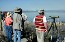 Birders at Tule Lake National Wildlife Refuge
