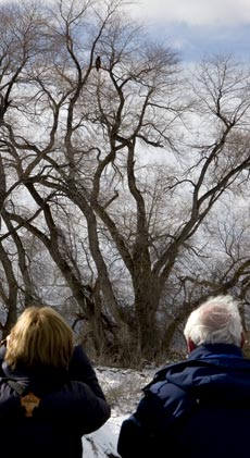 Birders Studying an Eagle in the Lower Klamath National Wildlife Refuge.