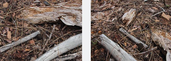 One morel, two perspectives.