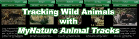 Tracking Wild Animals with MyNature Animal Tracks