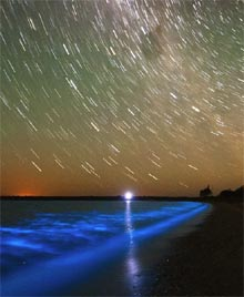 bioluminescense