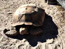 tortois225
