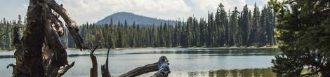 Island Lake, Dee Lake and the Waldo Tree