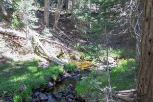 Sevenmile Creek at the Trailhead